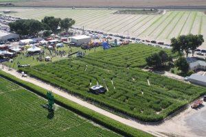 Farm-Festival-2015-048-1-768x512@2x